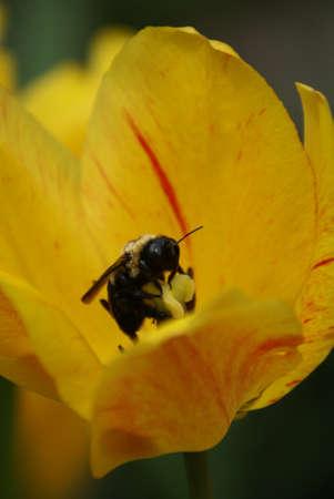 Flower Feeder