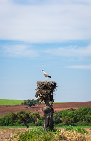 White stork on nest with beatiful countryside as background in La Roca de la Sierra, Badajoz, Spain.