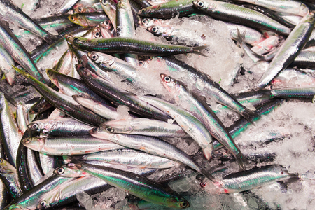 engraulis: European Anchovy Fish On Display On Ice On Market Store Shop.
