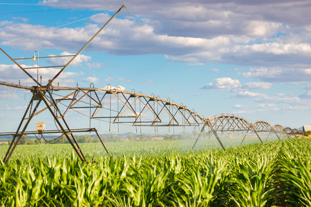 sistema de riego pivotante que riega un campo verde