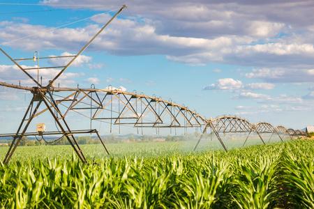 pivot sprinkler system watering a green field Stockfoto