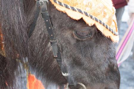 Close-up. Pony face in a festive headdress.