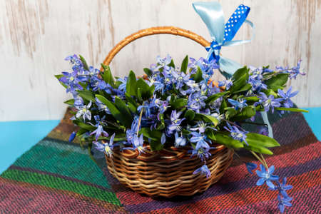 On a colored striped napkin in a wicker basket with a bow lies a bouquet of blue snowdrops.