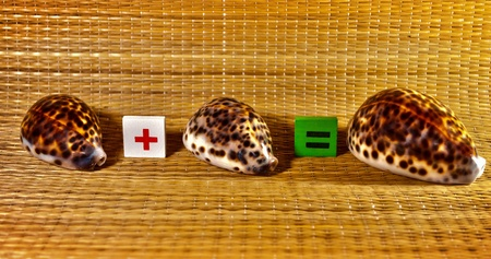 example: Demonstrating addition to the example of seashells. Stock Photo