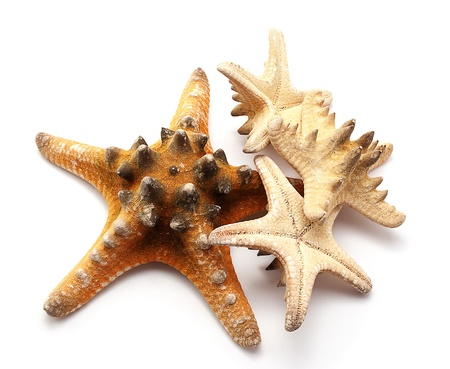 Some seastars different sizes  isolated on  white.