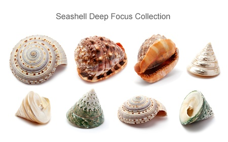 Set of seashells deep focus photo, isolated on white.