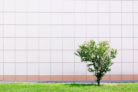 Small green tree against the wall of white squares. photo