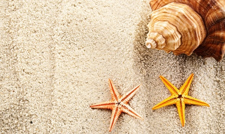 Marine themed background of few seashells on a sand. photo