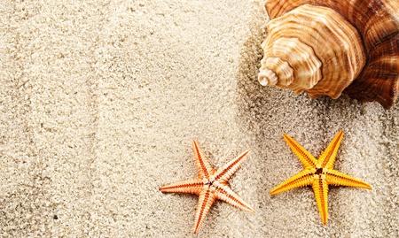 Marine themed background of few seashells on a sand. photo