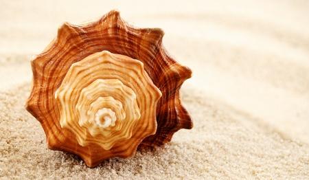 Beautiful seashell on a sandy background. photo