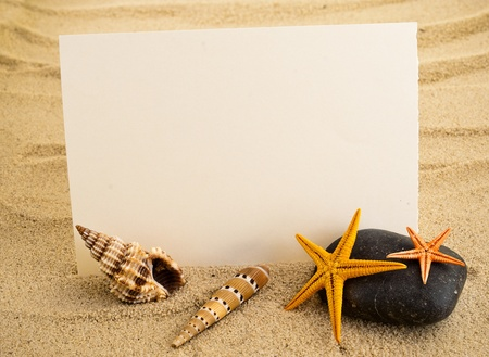 Marine still life with empty paper sheet and some\ seashells.