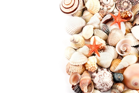 Still life of little seashells on a white background. photo