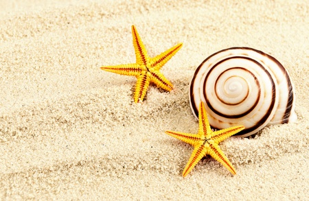 Spiral seashell and two seastars on a sand  photo