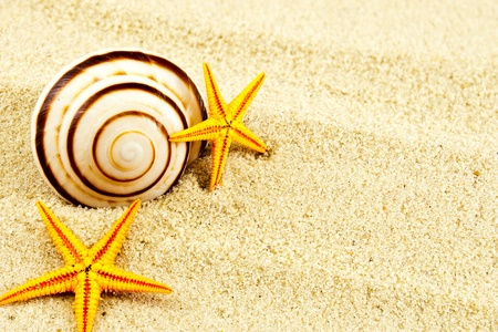 Spiral seashell and two seastars on a sand. photo