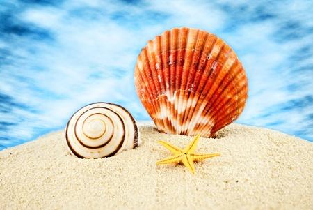seastar: Big scallop, spiral seashell and little seastar on sand against cloudy sky. Stock Photo