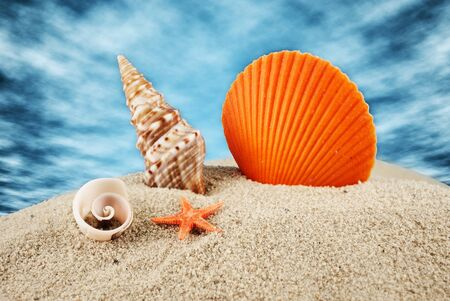 Big scallop, little seastar and spiral seashells on a sand against the blue cloudy sky. Stock Photo