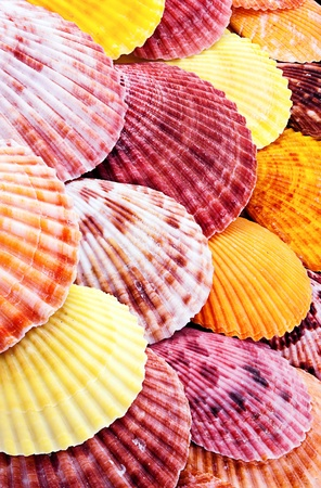 entire: Entire background of colorful scallops different sizes.  Stock Photo