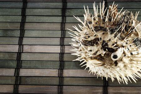 pez globo: El espantap�jaros de pez globo en una estera de madera. Foto de archivo