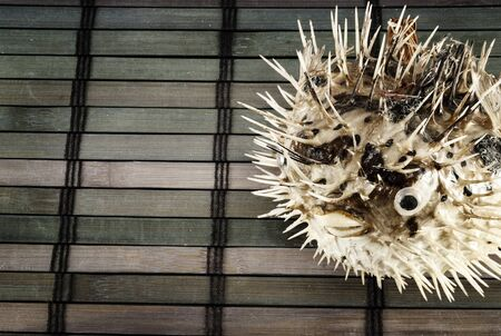 blowfish: The scarecrow of blowfish on a wooden mat.