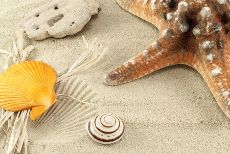 Close up of marine items on a sand  photo