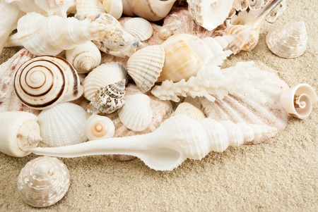 Lots of different seashells on a sand. photo