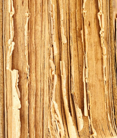 Closeup of old book pages texture. photo