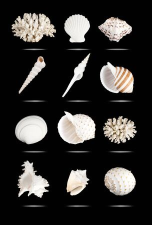 White seashells set, isolated on black.