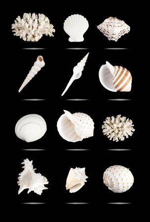 White seashells set, isolated on black.