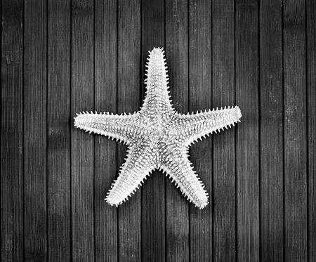 �spiked: Imagen monocroma de pinchos estrella de mar sobre un fondo de madera
