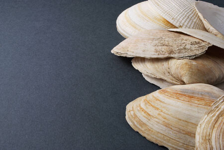 Few white seashells over gray background