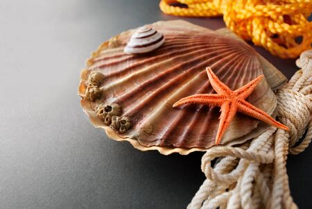 outgrowth: Beautiful composition of big scallop and few marine items on a gray background.
