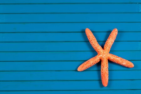 seastar: Rose-color sea star on a blue wooden background.