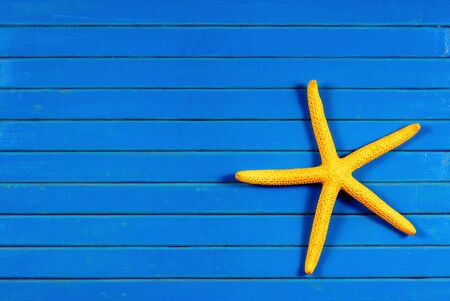 seastar: Yellow sea star on a blue wooden background.