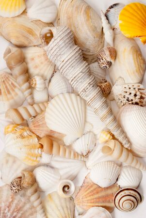 lots: Lots of different seashells and scallops. Stock Photo