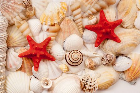 lots of: Lots of different seashells and scallops. Stock Photo