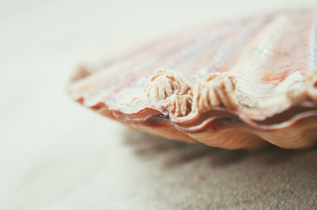 Closeup of barnacles on scallop over sandy background. Stock Photo