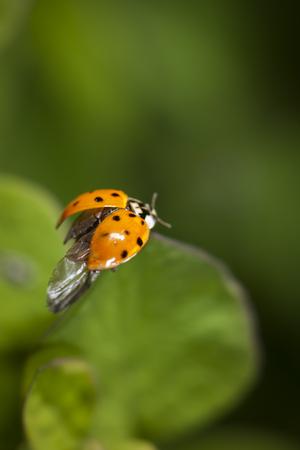 Ladybug before the flight