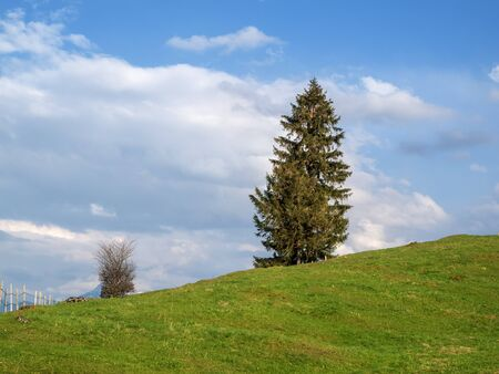 Pasture with single fir on hill Stock Photo