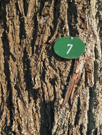 Bark with number seven vertical Stock Photo