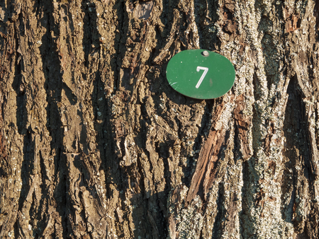 Bark with number seven horizontal Stock Photo
