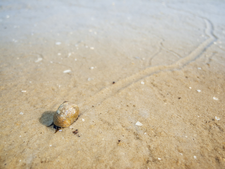 Snail with trail at low tide_horizontal Stockfoto
