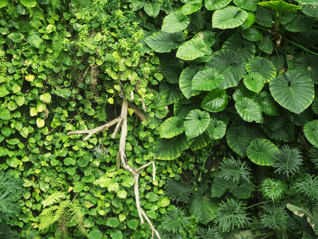 Full-frame view of various green leaves of a hedge with a dry branch. Stockfoto