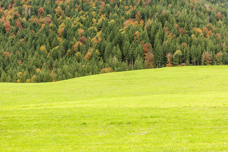 Landscape view over a wavy Bavarian meadow with autumnal coniferous forest behind;