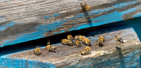 Life of Worker Bees. The Bees Bring Honey.