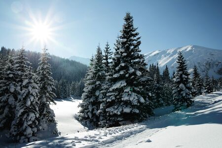 Snowy view in Tatra Mountains, winter landscapes series Stock Photo