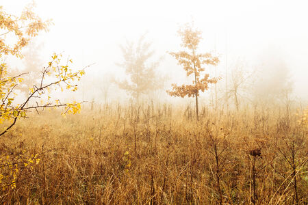 Trees in a fog in autumn scenery photo