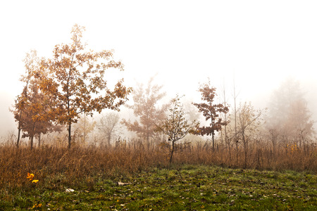 HDR image of trees in a fog in autumn scenery photo
