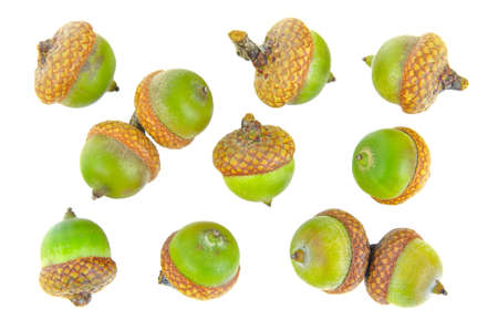 Green acorns isolated on white background Stock Photo