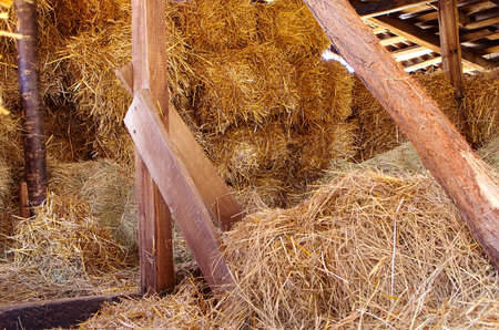 Store hay in the barn to feed the cattle