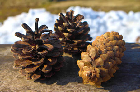 3 year old: Three cones photographed close in winter